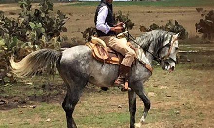 Ignacio Garibay se hace criador de reses bravas