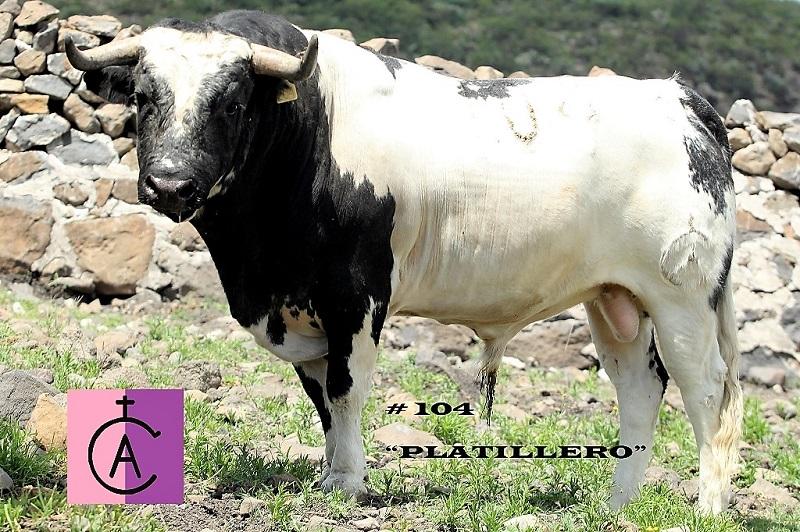 Los toros de Maravillas para Doxey