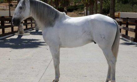 Murió «Dólar» , el caballo estrella de Ventura