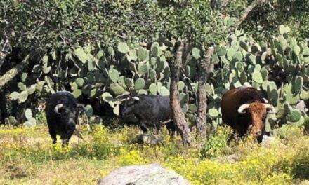 Coloquios taurinos en la UTNA