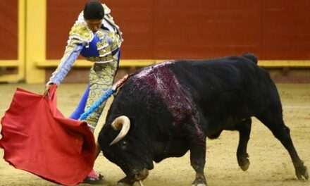 Héctor Gutiérrez: Torear siempre motiva